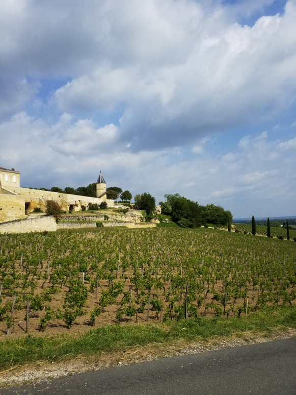 The châteaux and their vineyards